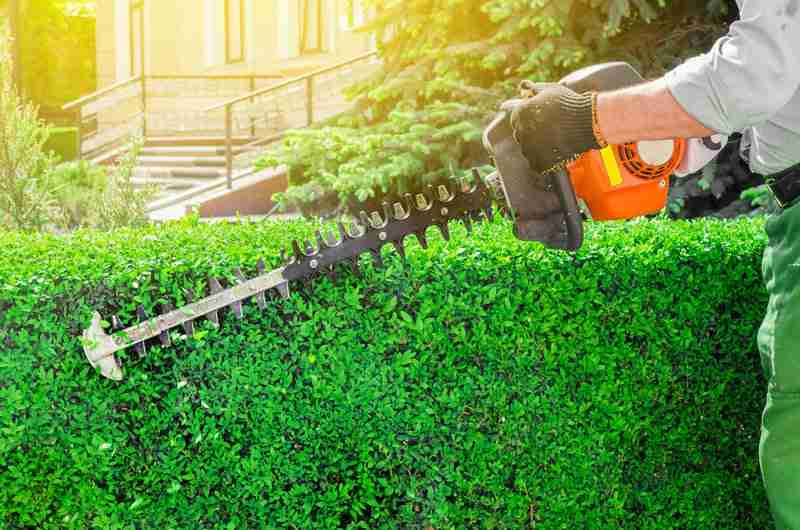 Comprehensive Pruning Services